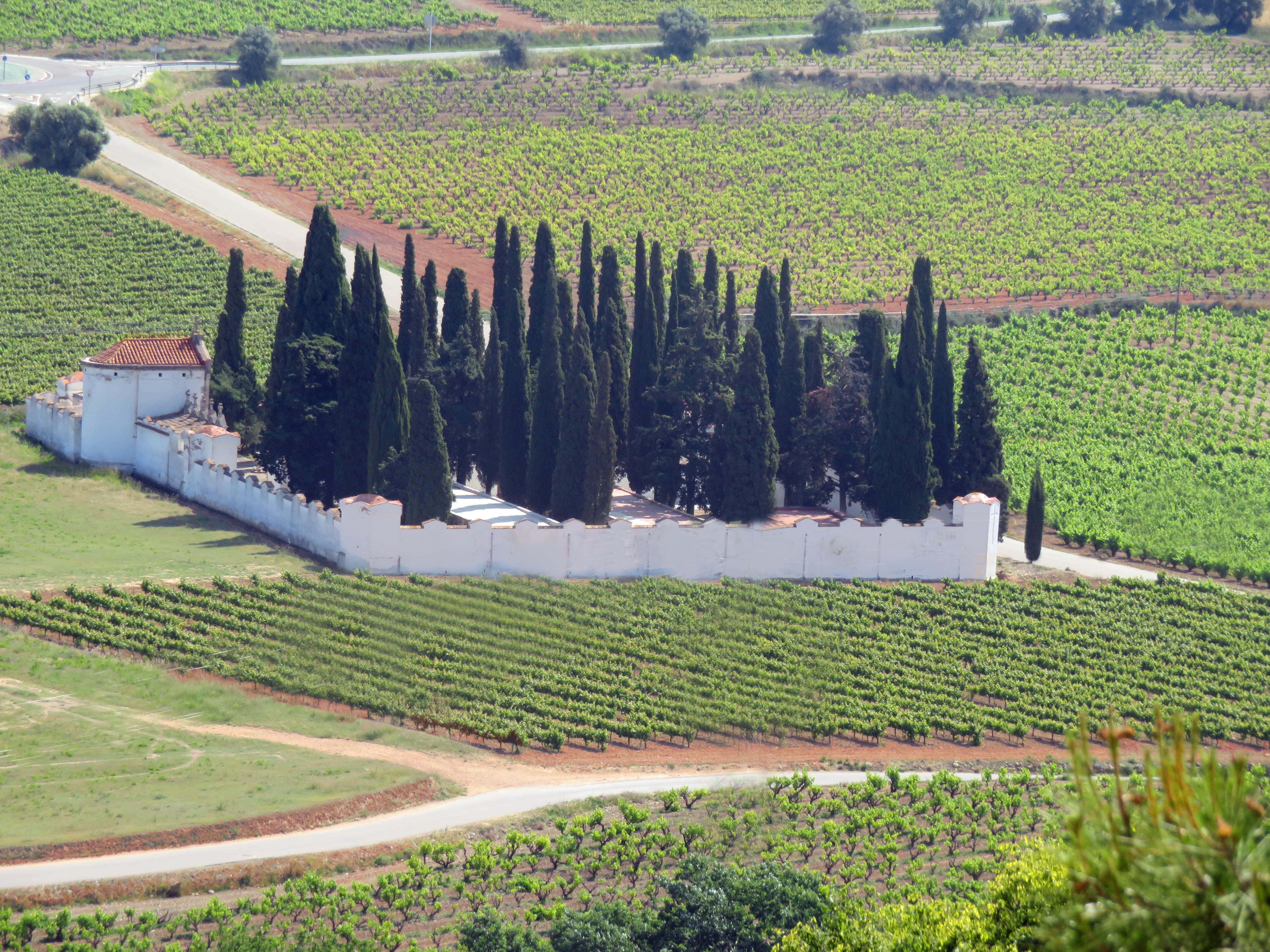 Wijngaarden en begraafplaats in de Penedes